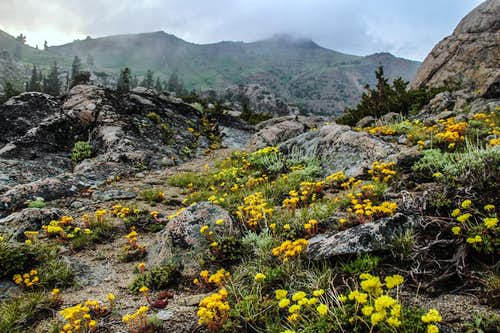 Flowers below Red Lake Peak