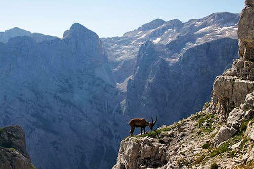 On the N ridge of Bovski Gamsovec