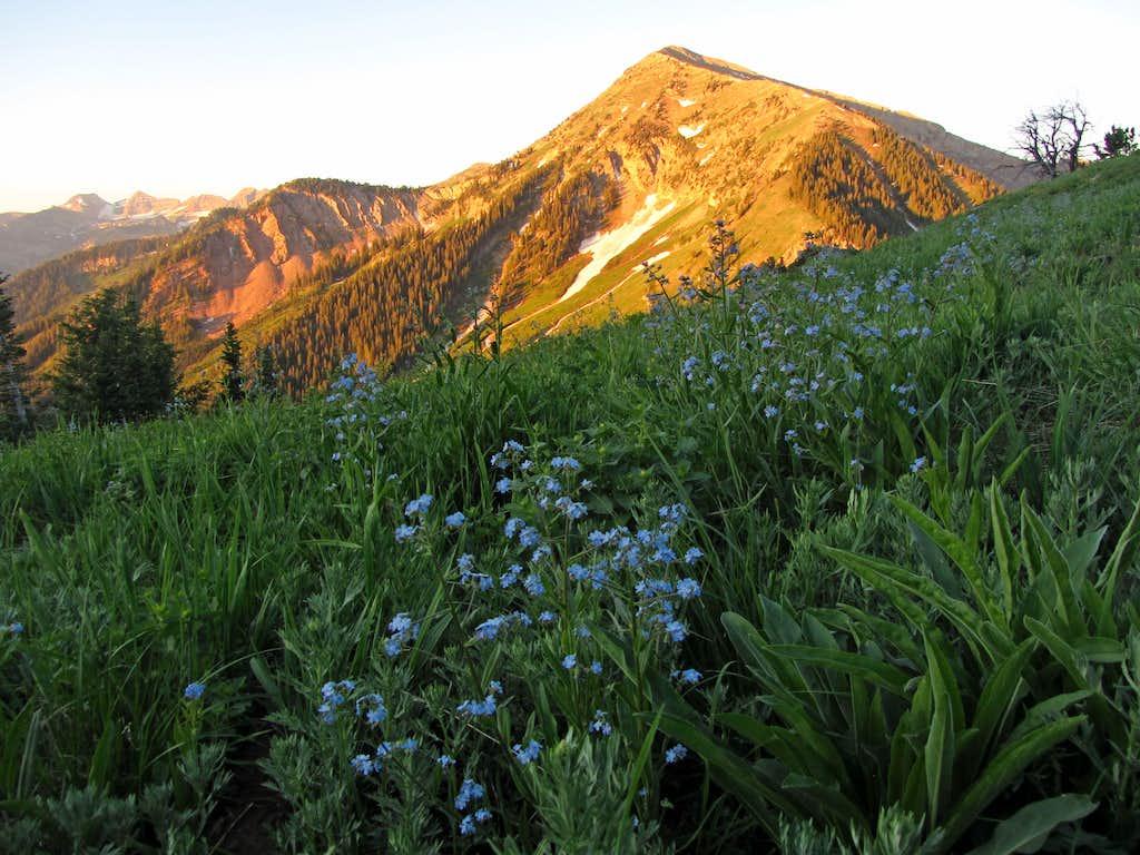 Box Elder flowers & alpenglow