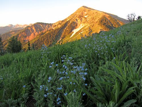 Box Elder flowers & alpenglow