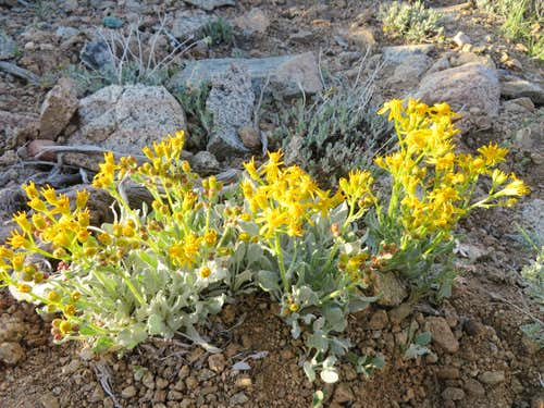 Flowers on the Boundary trail