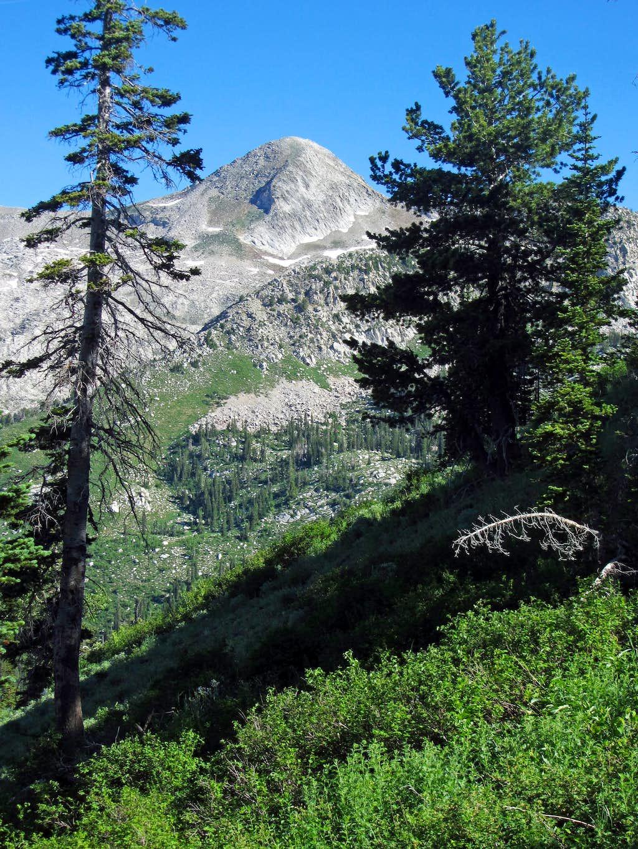 Pfeifferhorn through trees
