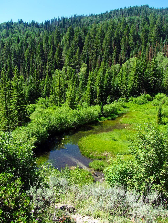 Deer Creek Trail pond