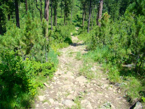 Rough portion of the trail