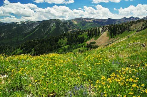 view from Mt. Raymond's ridgeline