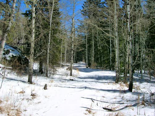 Trail 4 Winter View
