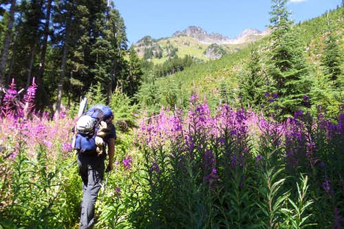 Fireweed and views