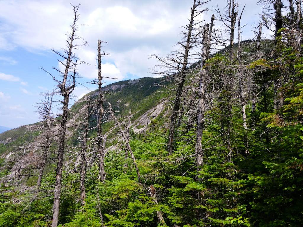 Hiking Giant