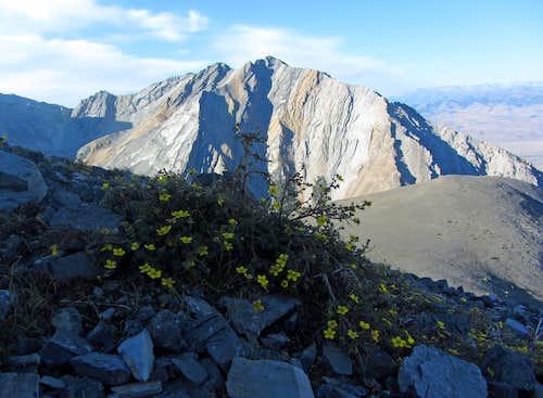 Mount Morrison & wildflowers
