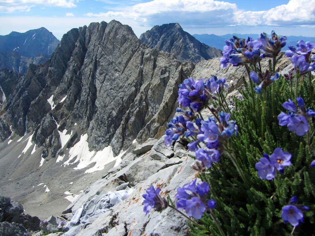 Borah wildflowers