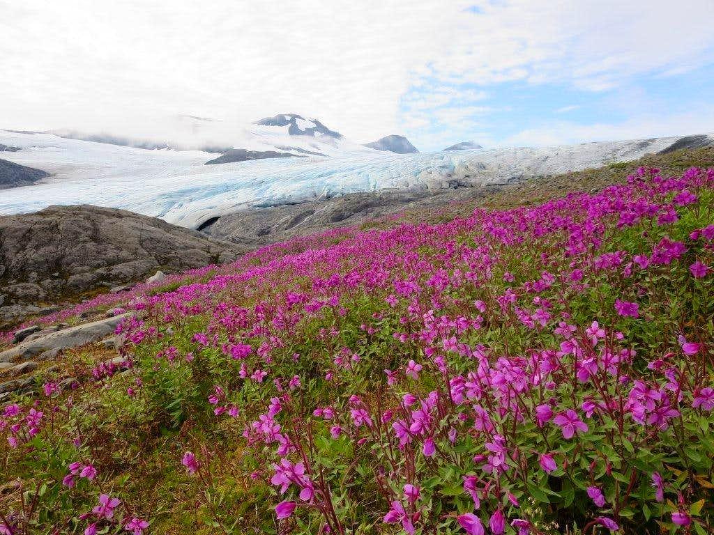 Foot of the glacier