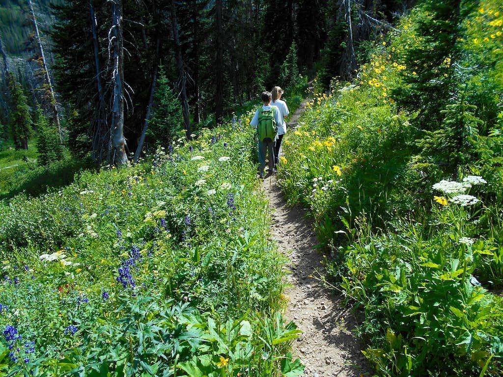 Gold Creek Trail