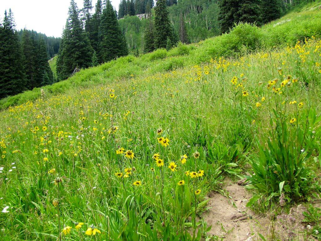 On Elbert Creek Trail