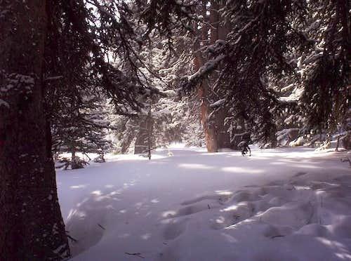 Fresh snow near Medicine Bow...
