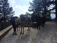 Mules at the refuge
