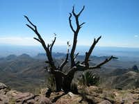 South Rim Tree March 05