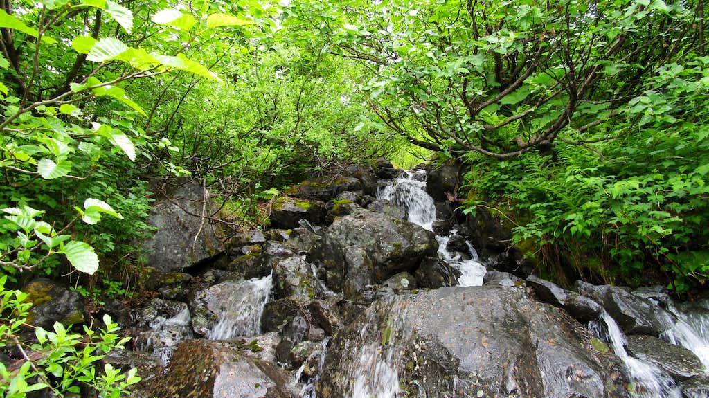 Bushwhacking to the NW ridge of Jatt Peak