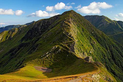 Monte Floriz