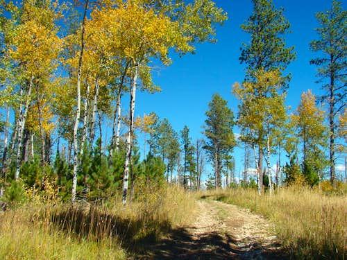 Summit Area Fall Colors