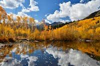 Colorado Foliage