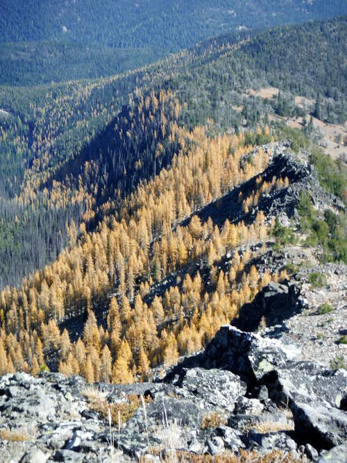 Looking at the beautiful larches
