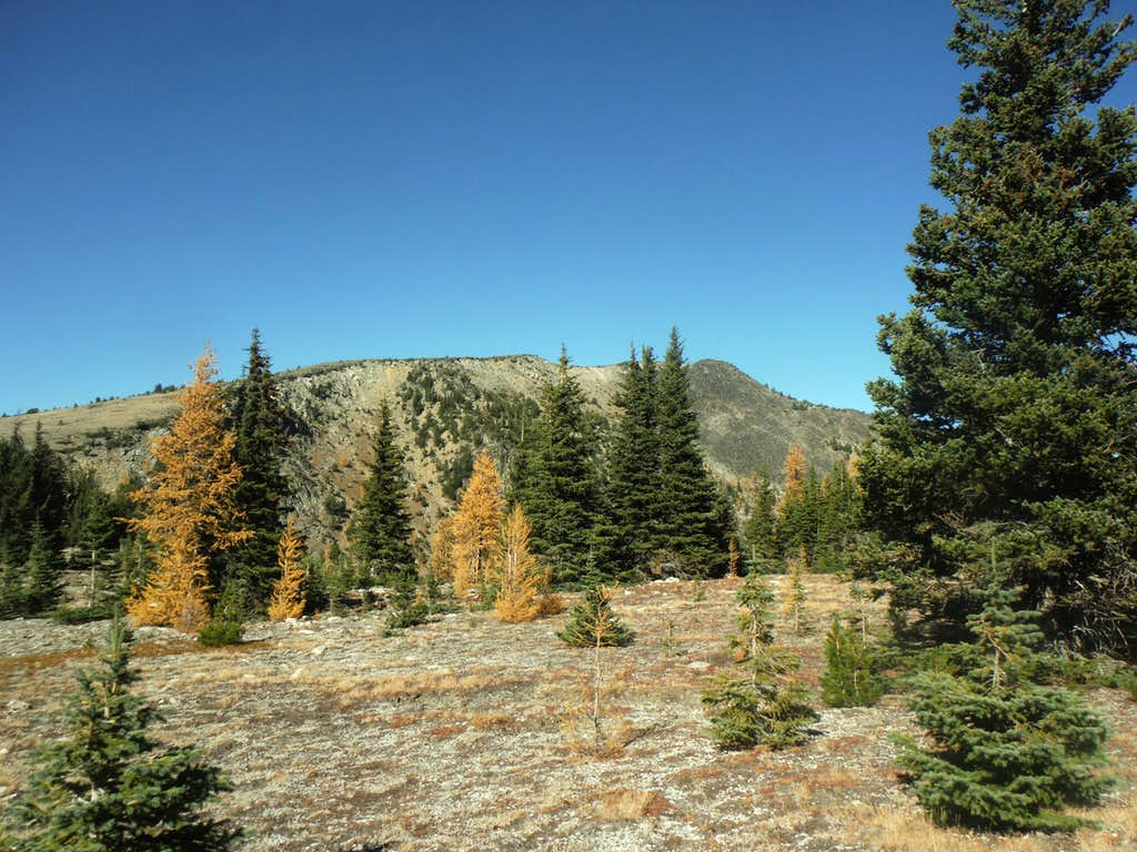 Larches and Rock Mountain