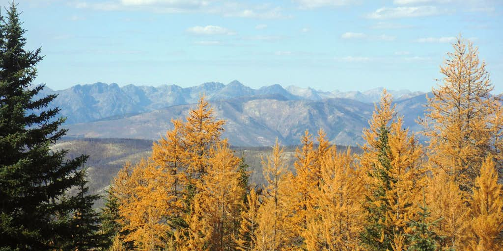 Larches and summits