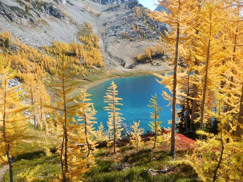 Larches at Ice Lakes