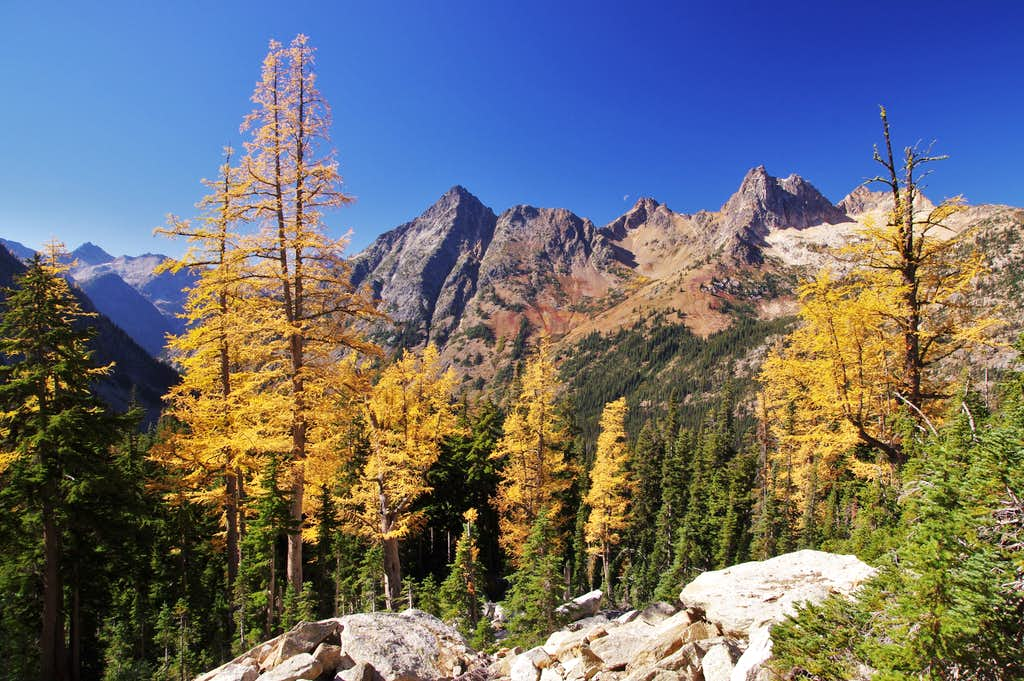 Larches in the North Cascades