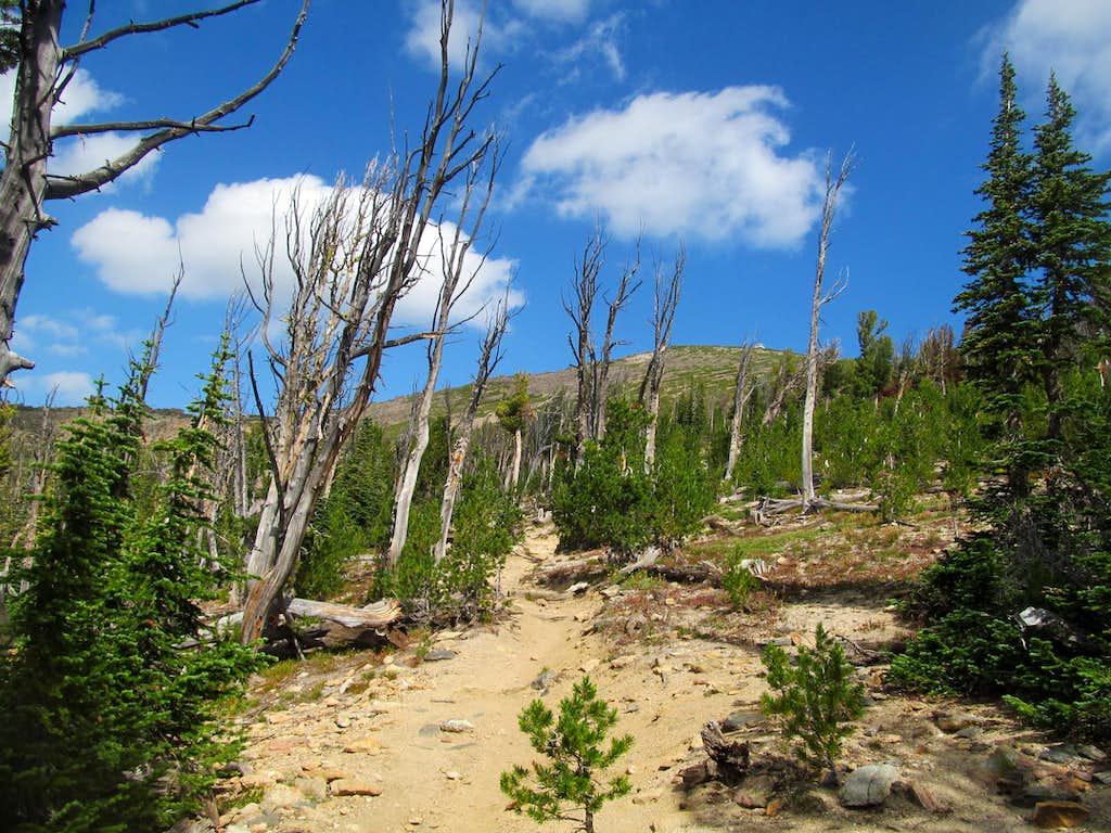 trail up Saint Mary