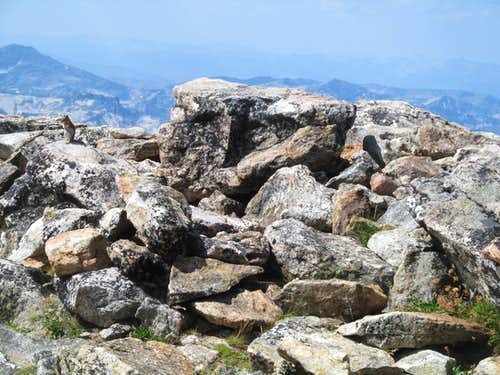 pika or something on the summit cairn