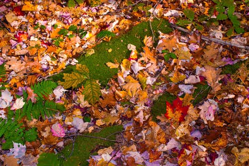 Moss and Colorful Leaves