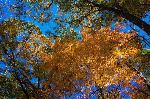 Sky Foliage