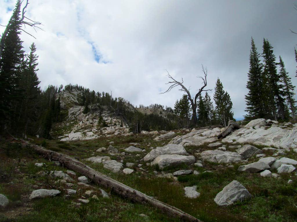nearing Log summit