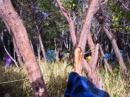 treeline campsite