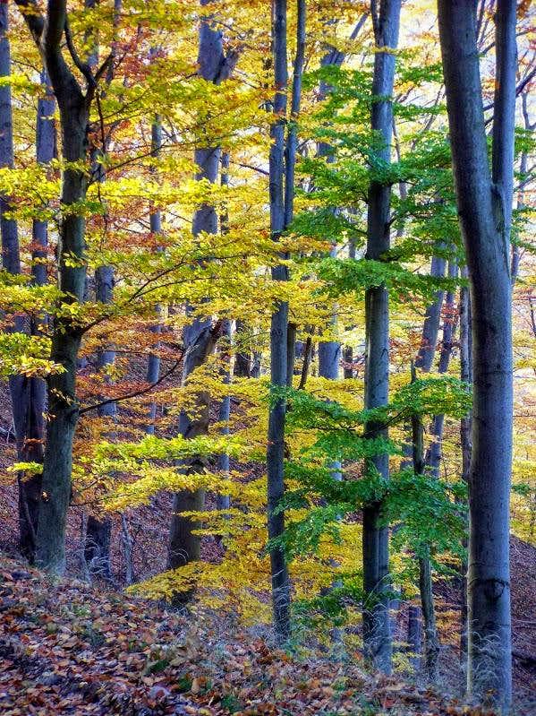 Fall foliage on Prédikálószék