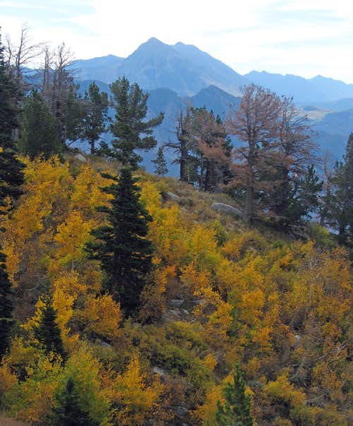 North Timp fall colors