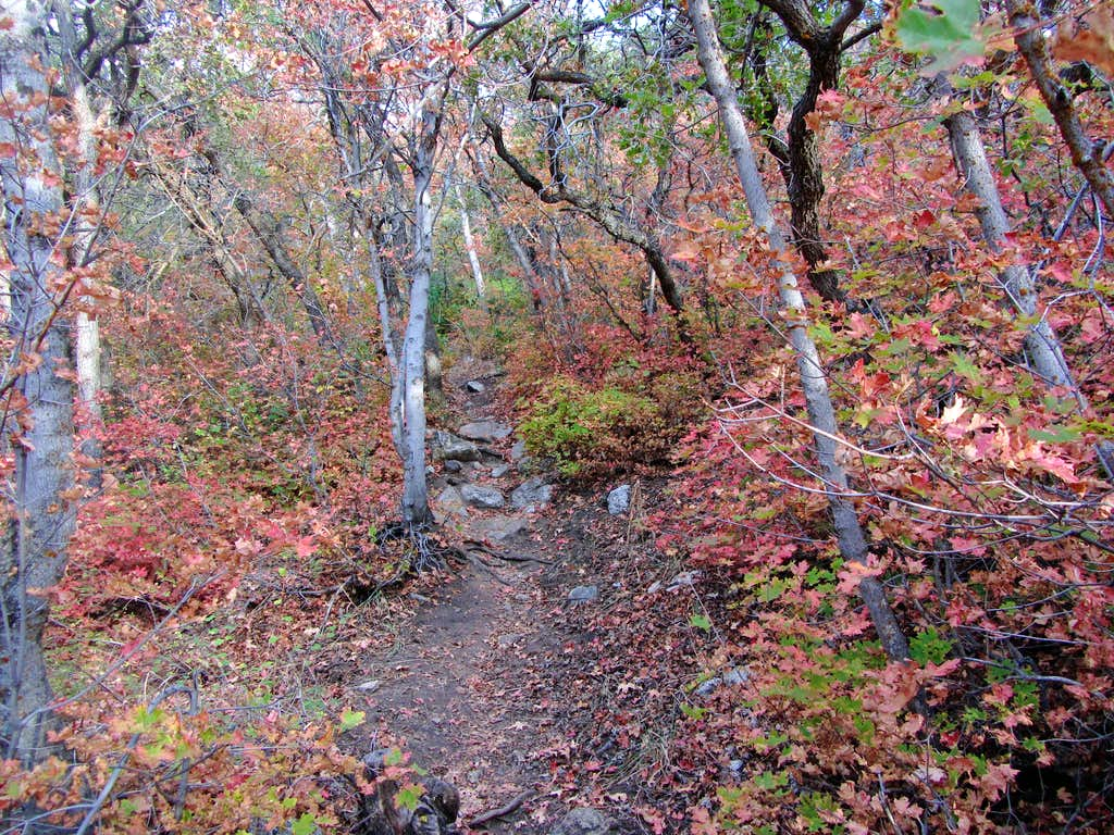 Jacobs Ladder fall colors