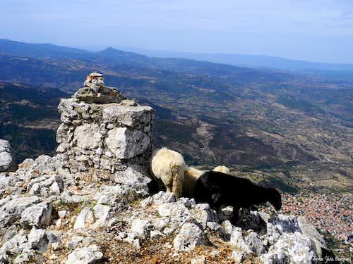 Sheep, essence of Sardinia highlands landscape