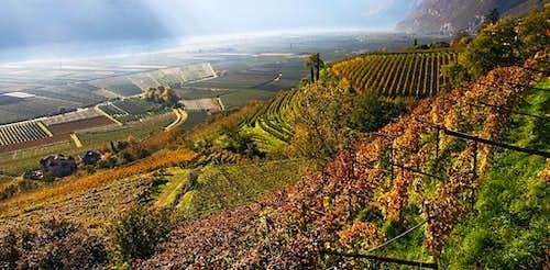 Wineyards near Kurtatsch/Cortaccia