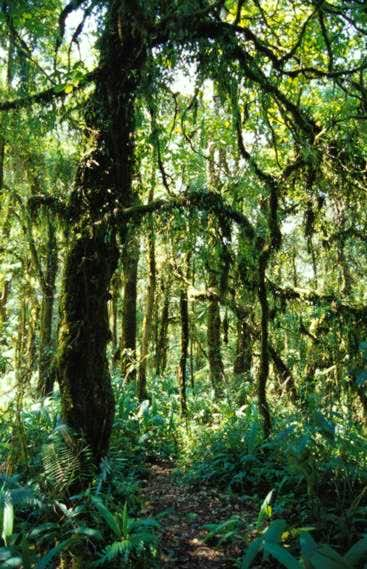 Forest path/Donald Bason