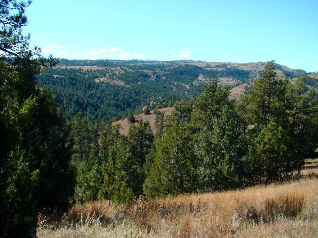 Brady Canyon