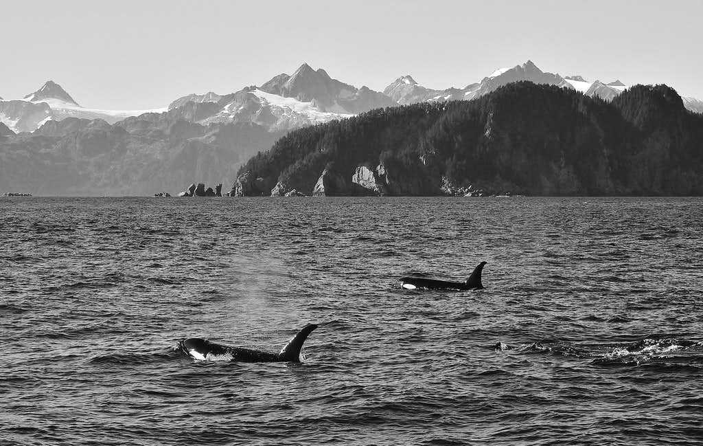 Kenai Peninsula Alaska Photos Diagrams Amp Topos