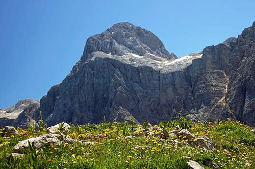 Triglav summit above blossoming meadows