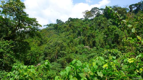 Dense equatorial rainforest