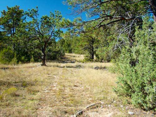 Trail View from Upper Ridge