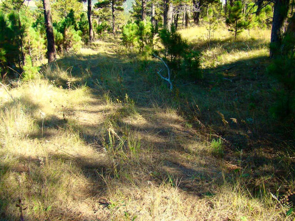 Old Road on Brady Peak