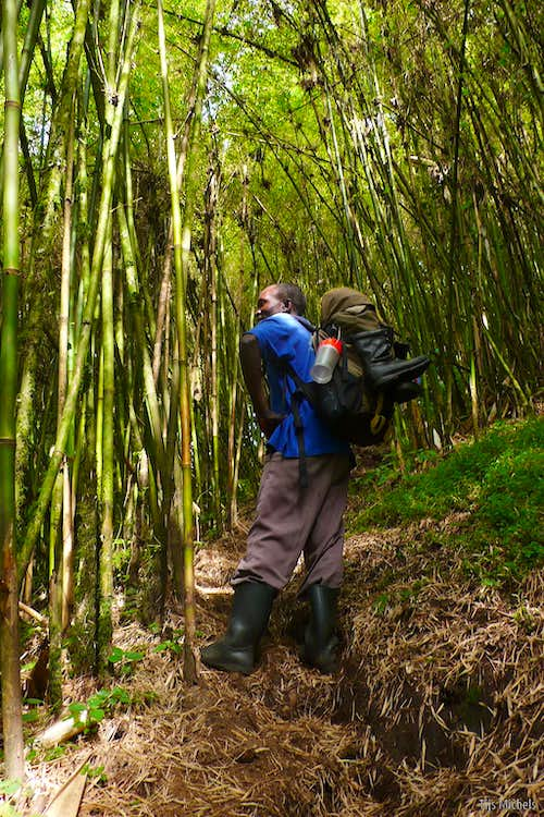 Guide in the bamboo zone
