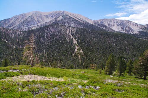 San Gorgonio From Grinnell's South Slope