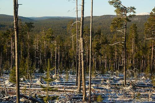 Jaurujoki wilderness